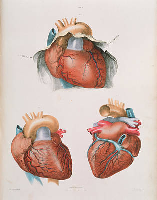Heart Art Print by Sheila Terry/science Photo Library