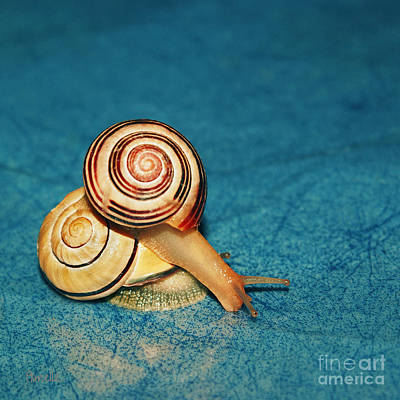 Photograph - Heart Snails by Aimelle