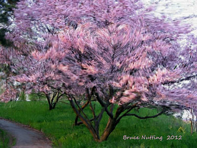 Art Print featuring the painting Heartfelt Cherry Blossoms by Bruce Nutting