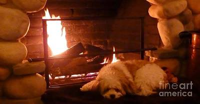 Photograph - Hearth Warming Dog by Susan Garren