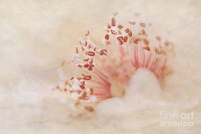 Hearts And Flowers Art Print by A New Focus Photography