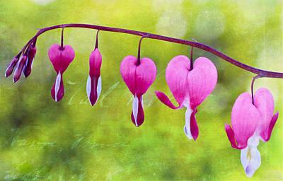 Photograph - Heart's On The Line by Heidi Smith
