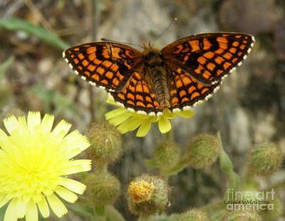 Heath Fritillary Butterfly Art Print