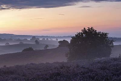Ronald Photograph - Heather Field In Morning Gelderland by Ronald Kamphius
