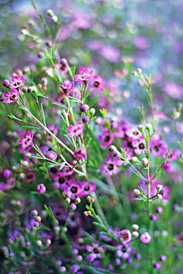 Heather Wall Art - Photograph - Heather by Jessica Jenney