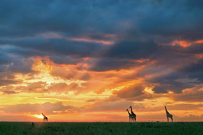 Wild Animals Photograph - Heaven And Earth by John Fan