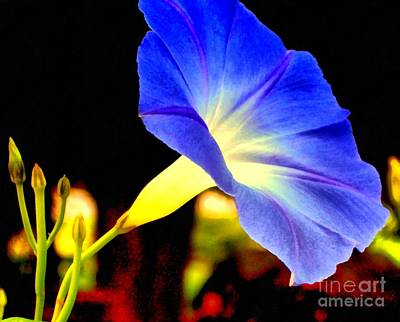 Photograph - Heavenly Blue Morning Glory  by Janine Riley