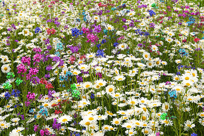 Art Print featuring the photograph Heavenly Flower Bed by Larry Landolfi
