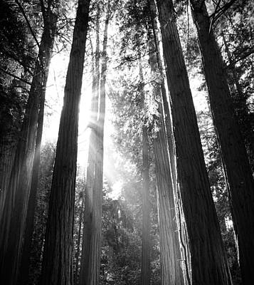 Photograph - Heavenly Forest by Bjorn Burton