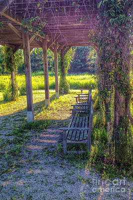 Nikki Vig Royalty-Free and Rights-Managed Images - Heavenly Grape Arbor by Nikki Vig