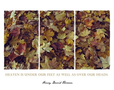 Photograph - Heavenly Leaves Triptych by Patricia Strand