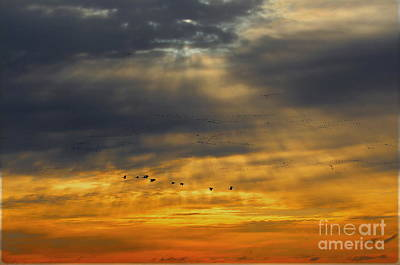 Photograph - Heavenly Skies by Elizabeth Winter
