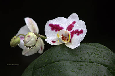 Raindrops On Orchids Photograph - Heavenly Tranquility by Jeanette C Landstrom