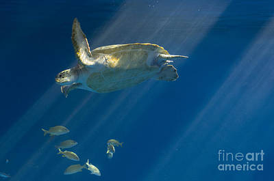 Photograph - Heavenly Turtle by Louise Magno