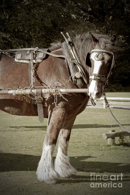 Photograph - Vintage Heavy Horse by Terri Waters