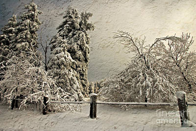 Photograph - Heavy Laden Blizzard by Lois Bryan