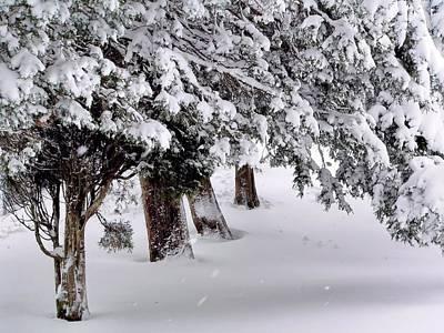 Photograph - Heavy Snow by Janice Drew