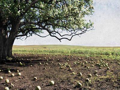 Photograph - Hedgeapple Paradise by Eric Benjamin
