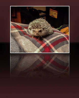 Digital Art - Hedgehog 5 by Photographic Art by Russel Ray Photos