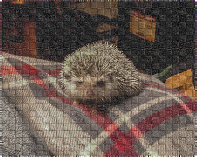 Digital Art - Hedgehog 6 by Photographic Art by Russel Ray Photos