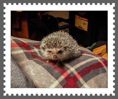 Digital Art - Hedgehog 7 by Photographic Art by Russel Ray Photos