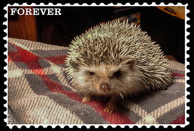 Digital Art - Hedgehog 8 by Photographic Art by Russel Ray Photos