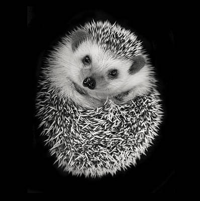 Hedgehog Wall Art - Photograph - Hedgehog by Tim Booth