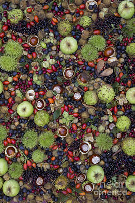 Apple Photograph - Hedgerow Harvest by Tim Gainey