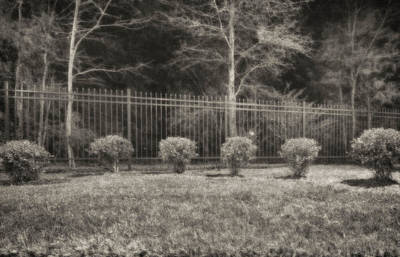 Hedges And Trees Art Print by J Riley Johnson