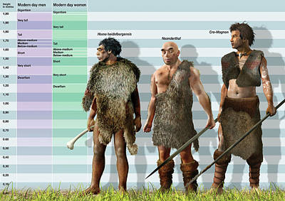 Height Variation In Pleistocene Hominids Art Print by Jose Antonio Pe�as