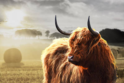 Heilan Coo On Fire Art Print