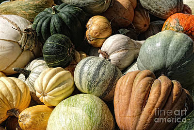 Photograph - Heirloom Squash #1 by Vinnie Oakes
