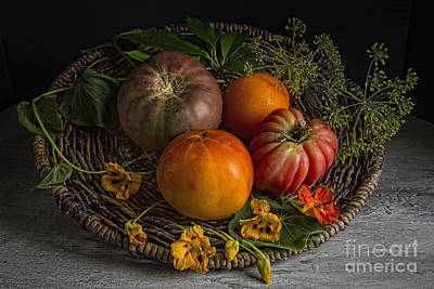 Heirloom Tomatoes Art Print by Elena Nosyreva