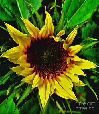 Painting - Helianthus Annus - Sunnydays by Vix Edwards