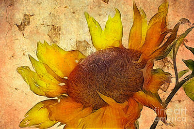 Sunflowers Royalty-Free and Rights-Managed Images - Helianthus by John Edwards