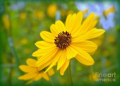 Photograph - Helianthus by Lisa L Silva