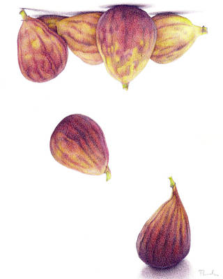 Helium Figs Art Print by Paula Pertile