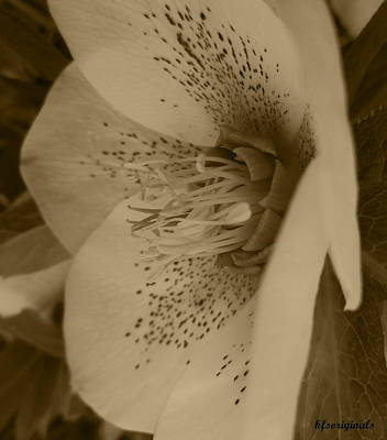 Flower Photograph - Helle 5 by Kathy Spall