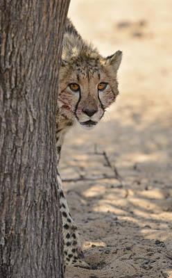 Bigcat Photograph - Hello Cheetah by Andy-Kim Moeller