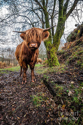 Hdr Landscape Photograph - Hello Cow by Adrian Evans