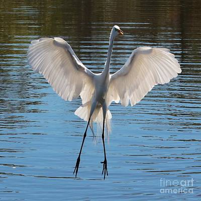 Egrets Photograph - Hello Great Egret by Carol Groenen