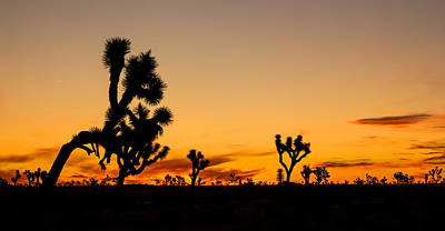 Hello Joshua Tree Art Print