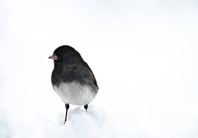 Winter Scene. Winter Landscape. Snow Landscape. Black And White. Birds Photograph - Hello Junco by Cheryl Baxter