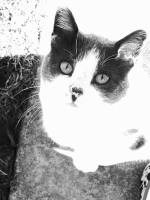 Photograph - Hello Kitty by Michelle Hoffmann
