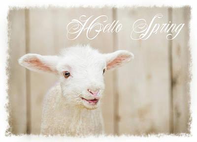 Sheep Wall Art - Painting - Hello Spring Lamb by Ramona Murdock