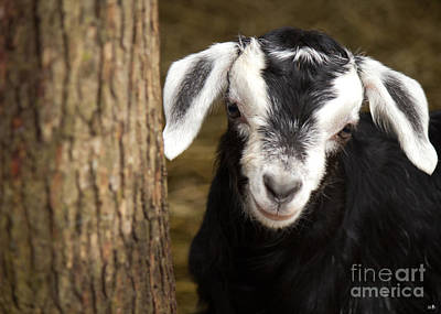 Photograph - Hello There by Sandra Clark