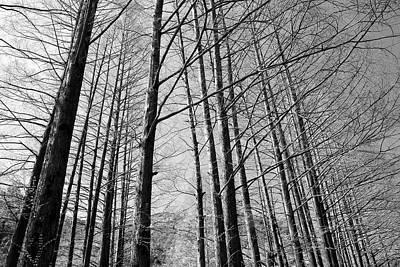 Hello Trees Art Print by Phoresto Kim