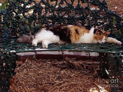 Hemingway House Wall Art - Photograph - Hemingway - Cat - Audrey Hepburn by D Hackett
