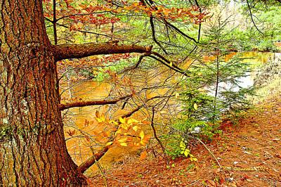 New Years - Hemlock and Beech Trees in Autumn Digital Art by A Macarthur Gurmankin