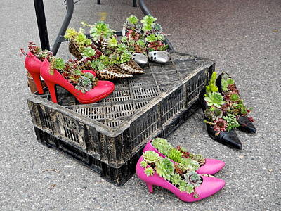 Photograph - Hens And Chicks In Heels by Kent Lorentzen